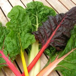 Altes Gemüse – neuer Geschmack
