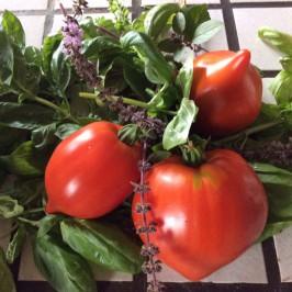 Tomaten- eine Sommerliebe