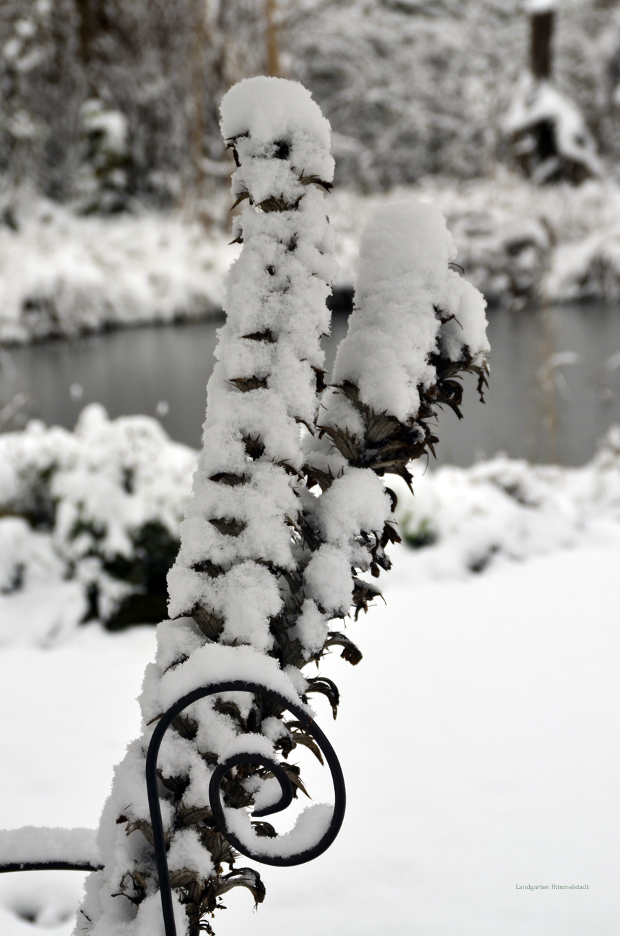 schnee und rauhreif verzaubern den garten landgarten. Black Bedroom Furniture Sets. Home Design Ideas