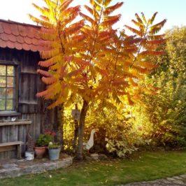 Landgarten im Goldenen Oktober