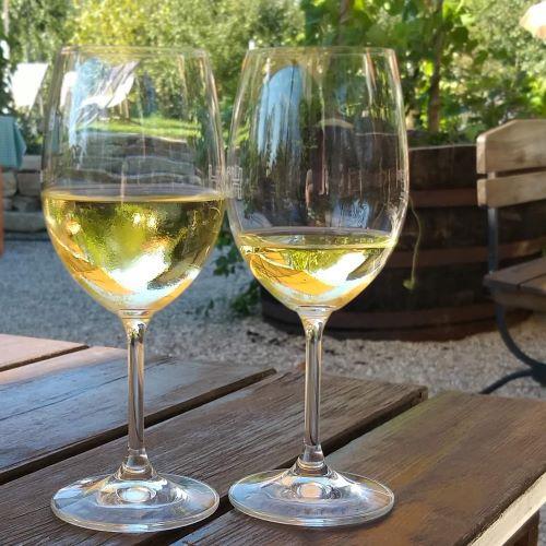 Auf den Spuren der Weinaromen